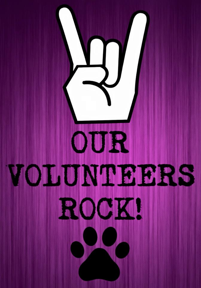 volunteers rock